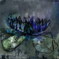 ' Water Lily 2 '