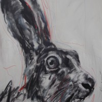 """"""" Hare """""""