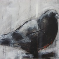 """ Pigeon """